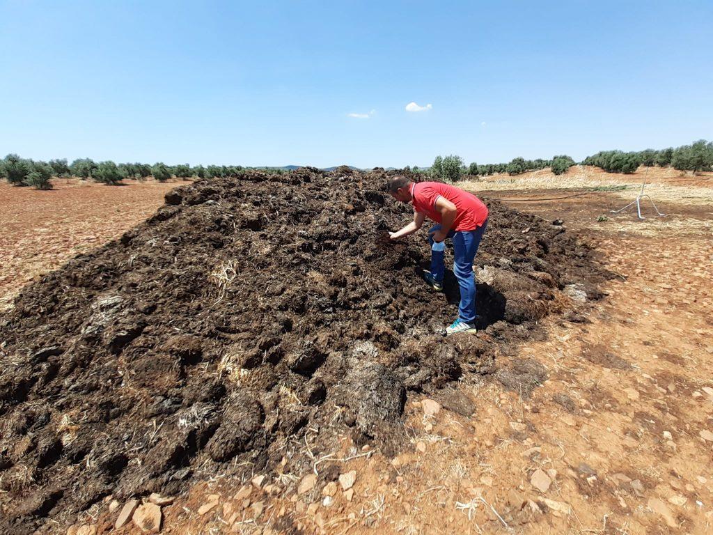 Estiércol compostado con el que fertilizaremos nuestros olivares y viñas